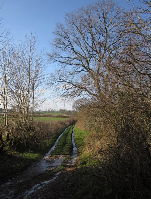 Green lane to Ashill