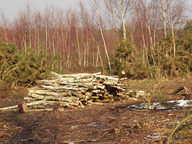 Whitmoor Common, Log Pile