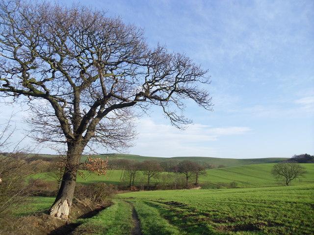 Farmland near Grimethorpe.