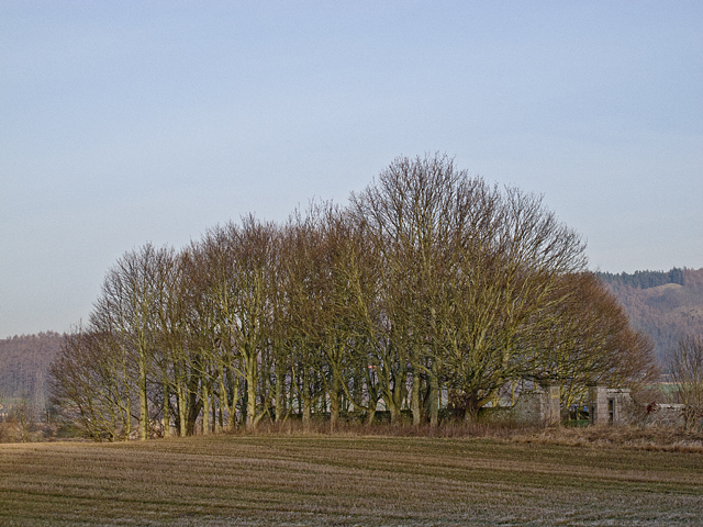 Burial ground at Dunbarney