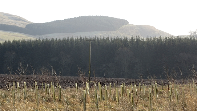 New woodland, Stonehill