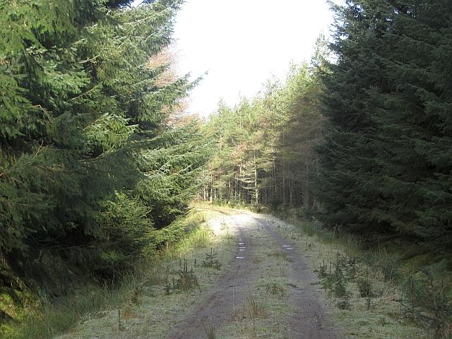 Sheriffmuir Big Wood