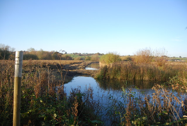 Ditch, Westbere Marshes