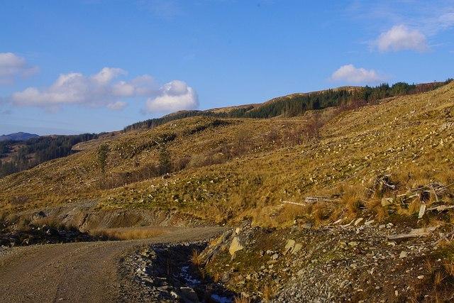 Clear felling in Glencripesdale