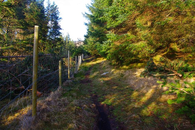 New deer fencing in the old ride running North from Coire Odhar