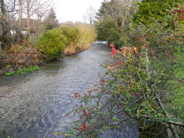 River Ebble, Coombe Bissett