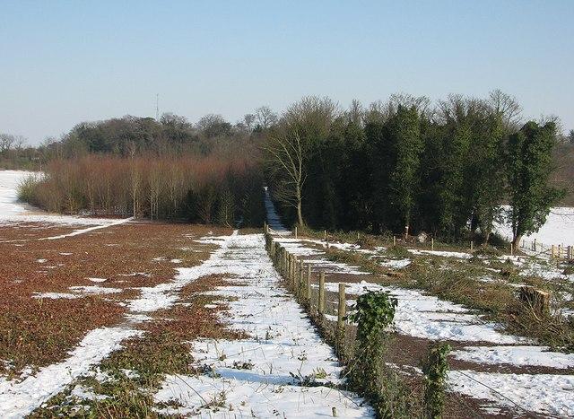 Towards Wandlebury