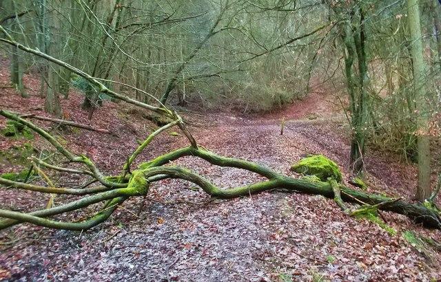 Tree on the Track