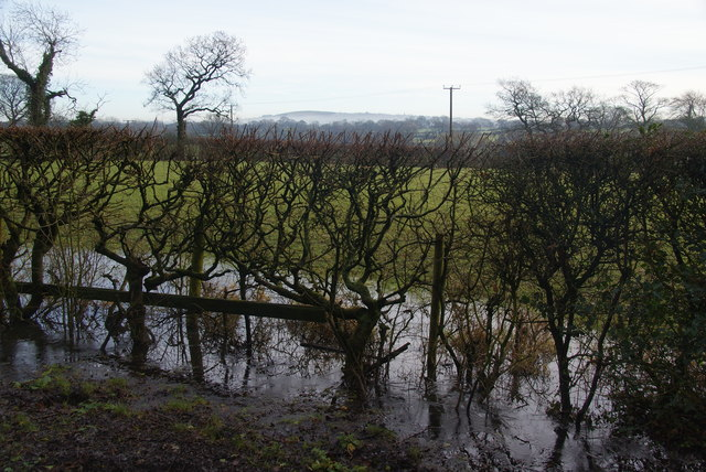 Flooded hedgerow by Bezza Lane