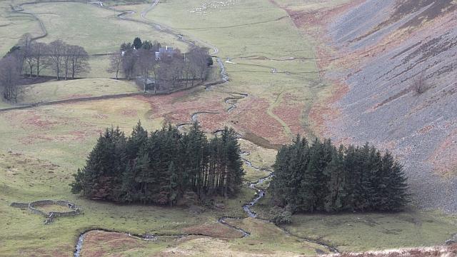 Woodland, Glenrath Hope
