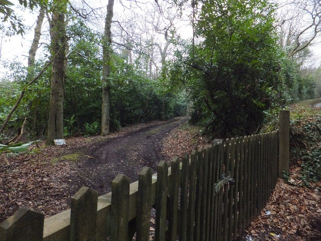 A track into Luscombe Wood