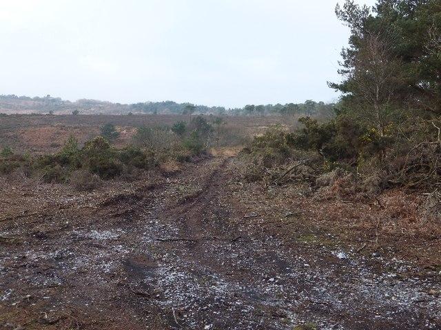 Moorland above Smallacombe Farm