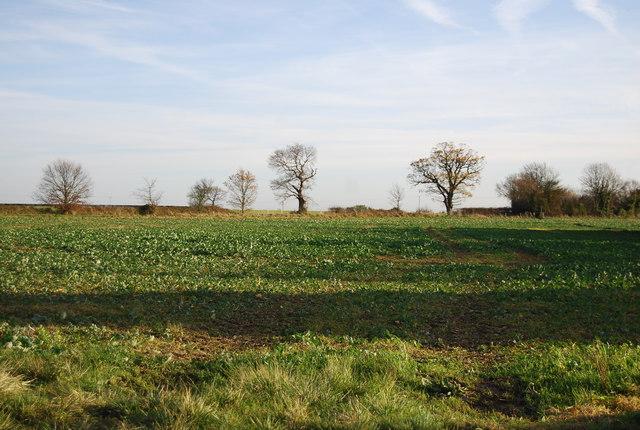 Farmland off Maypole Lane