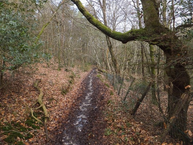 Track through woodland above Smallacombe Wood