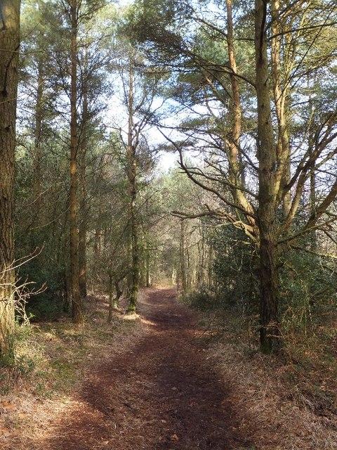 Track through woodland above Smallacombe Wood