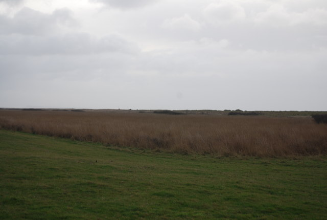 Reeds, Burton Mere