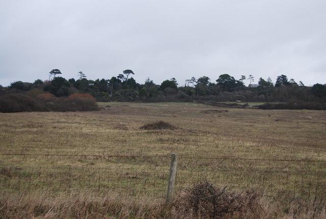 Farmland behind Cogden Beach