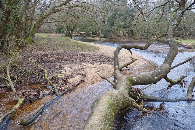 Fallen Tree in Avon Water