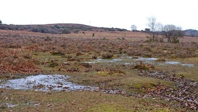 Boggy Plain