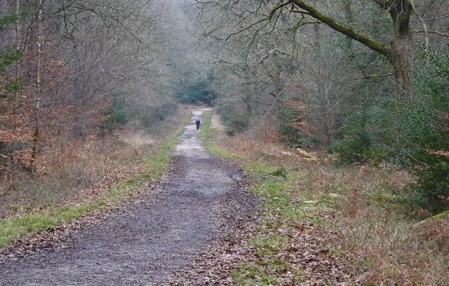 Lone Walker in Broadley Inclosure