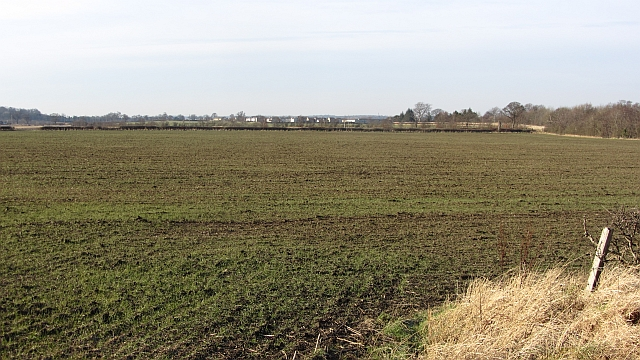 Winter cereal crop, Seggarsdean