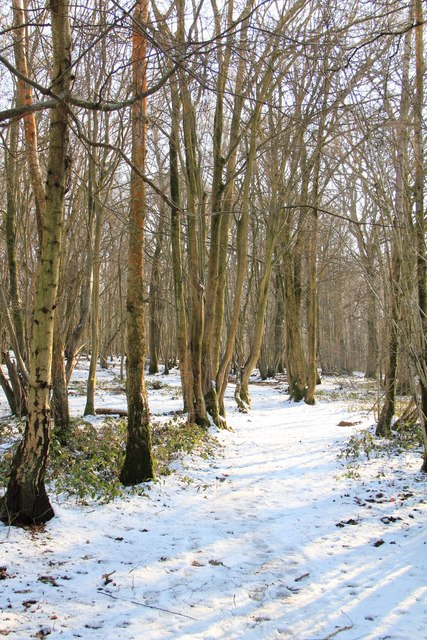 Winter path through Blackbrook Wood