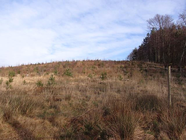 Young woodland, Colstoun