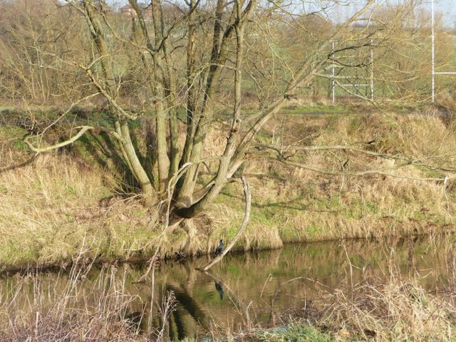 Reflections of a coppiced tree