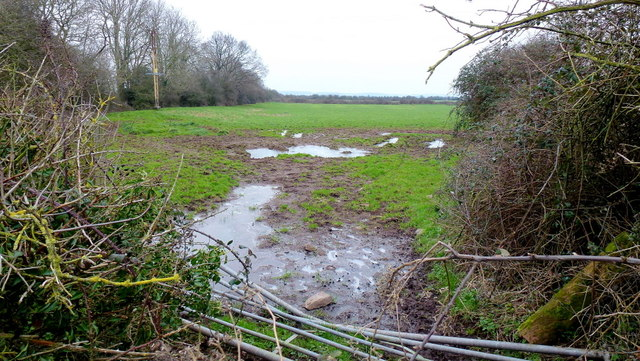 Alvington meadows