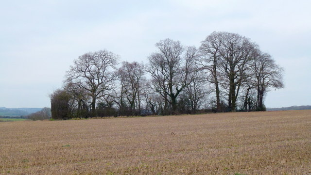 Copse at Naas