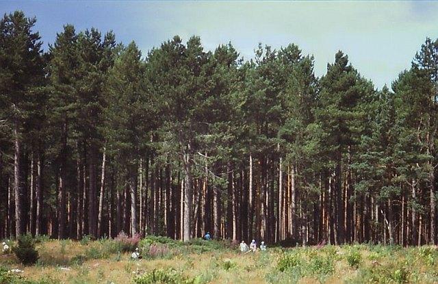 Roseisle Forest
