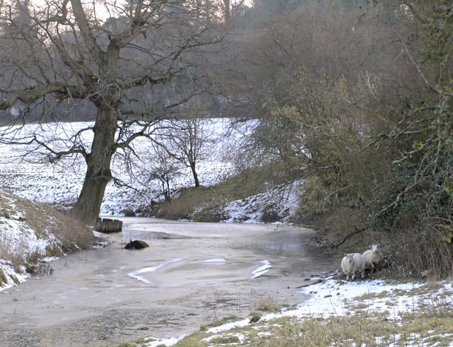 Sheep by the frozen Mole, Norbury Park