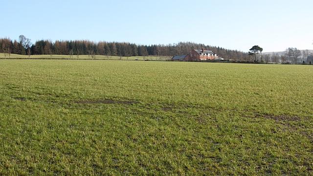 Field, Kippenrait