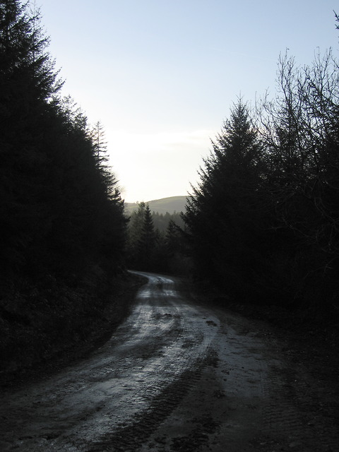 Forestry road in Coed Tynybedw