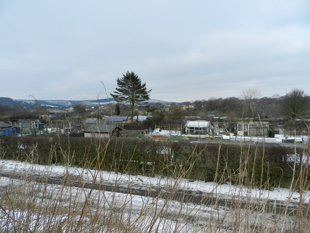 Allotments, with pine tree