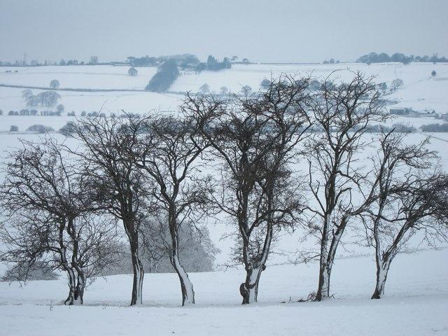 Trees at Icklesham