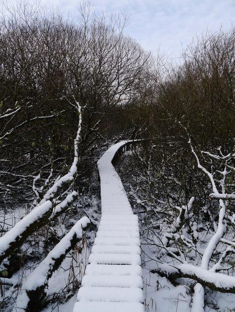 Boardwalk In The Ettrick Marshes