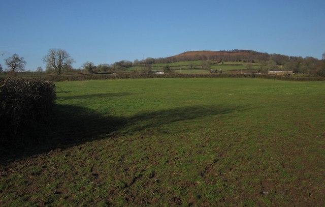Pasture, Pitt Farm