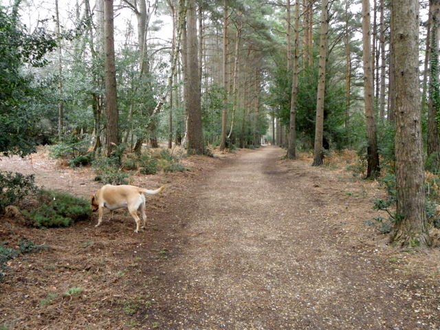 Woodland walk near Puttles Bridge