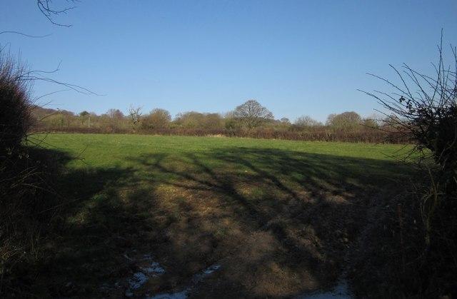 Field by Blackwater Road