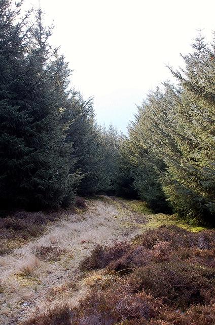 Forest path, Caberston Craigs
