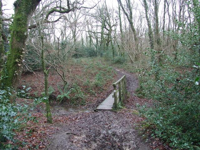Footbridge In Holt Wood