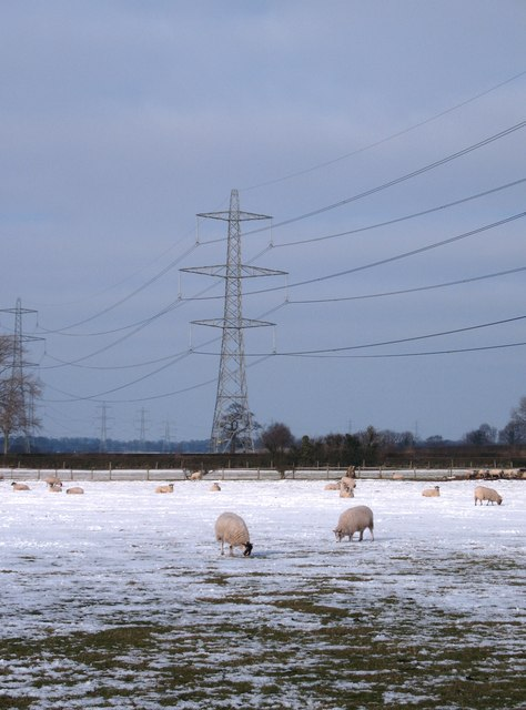 Snow,sheep and pylons