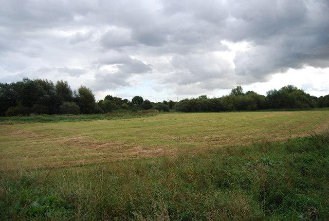 Grassland, Bramford Meadows
