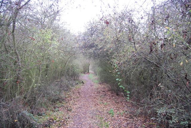 Saxon Shore Way, High Halstow NNR