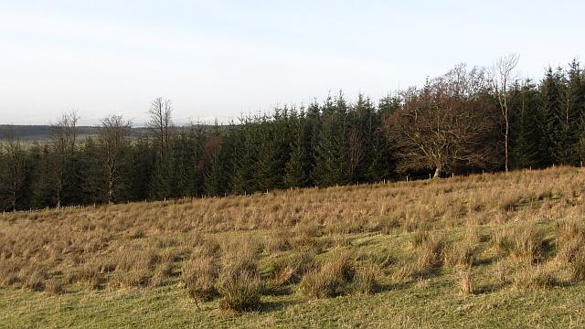 Strip wood, Cauldhame