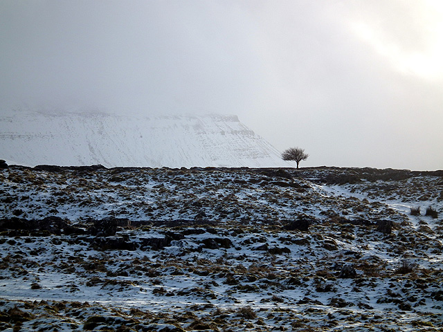 A lonely tree and Ingleborough