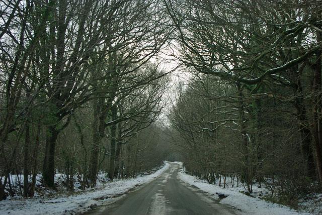 Park Lane in Vert Wood