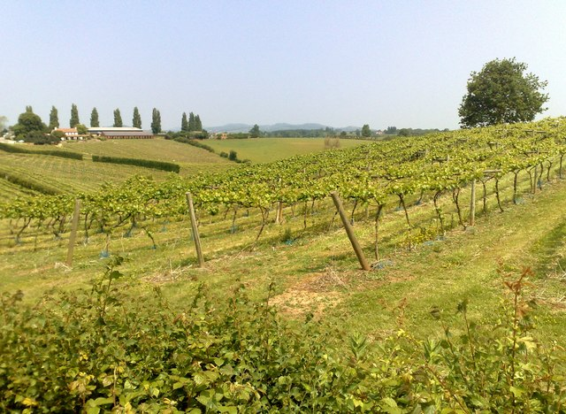 A Gloucestershire Vineyard