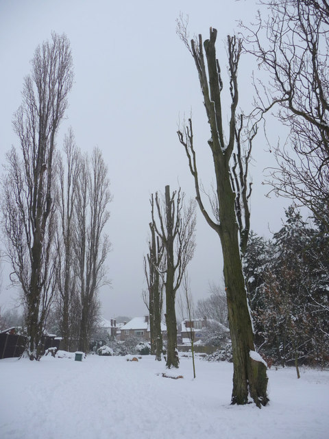 Poplar Trees, Oakwood Park, London N14